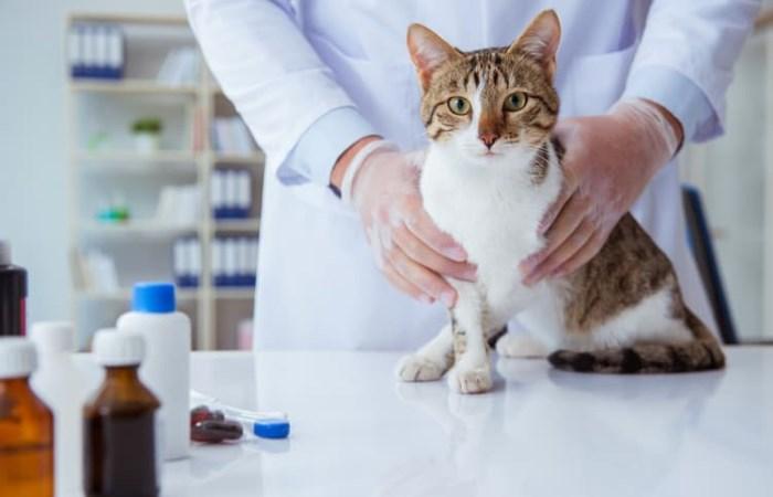 Аптечка для кота: что там должно быть