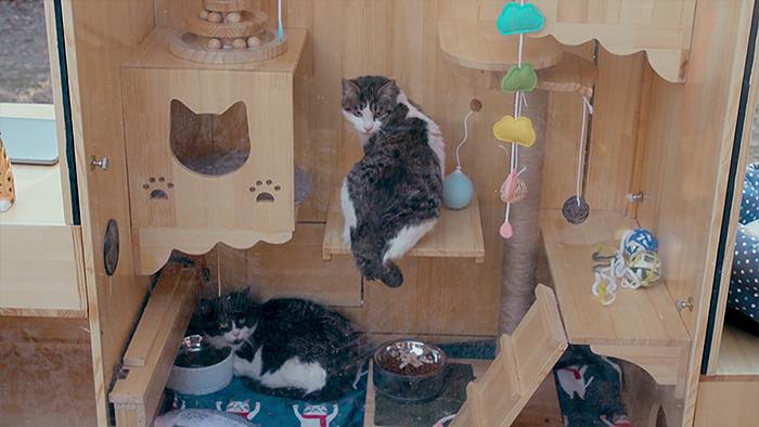 Китаец спроектировал высокотехнологичный домик для кошек