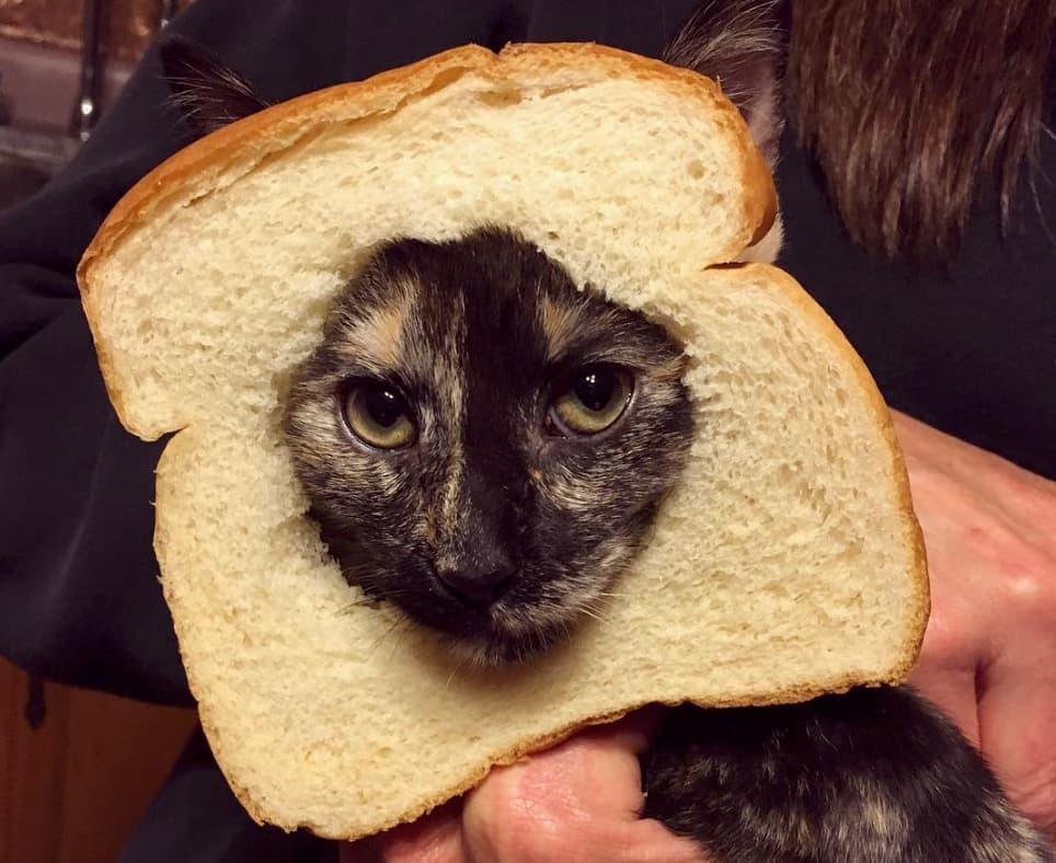 хлеб на коте