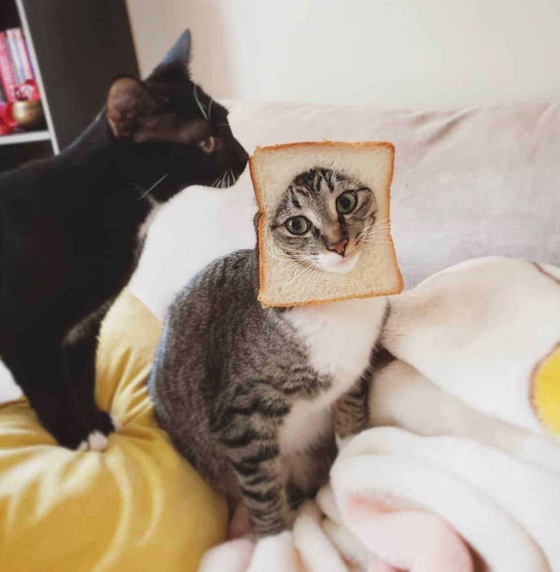 два кота один в хлебе