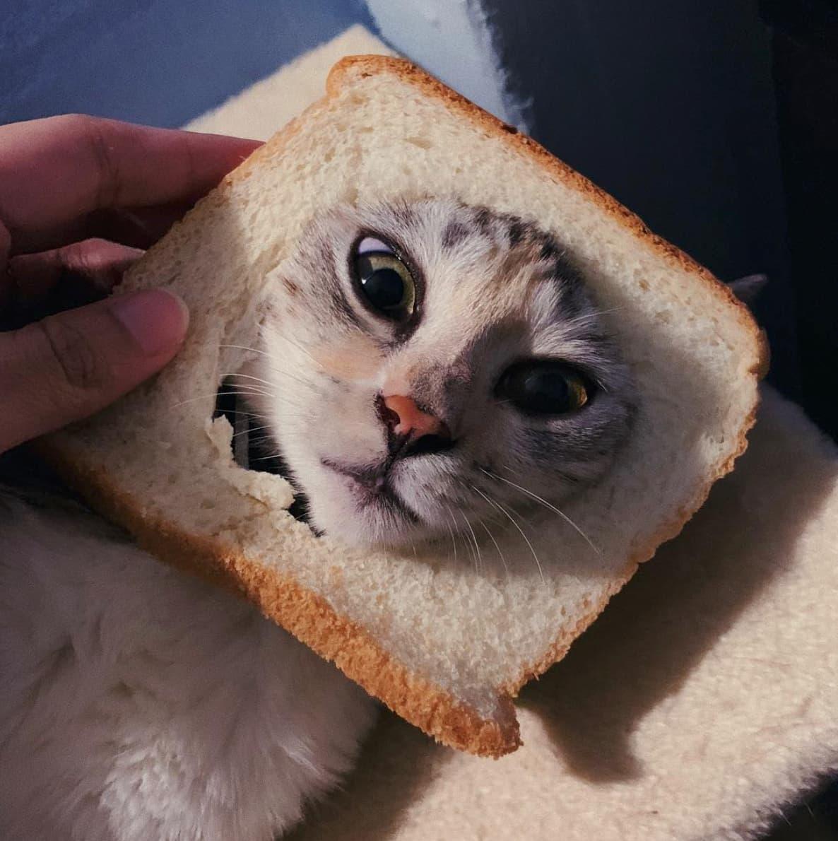 котик в хлебе