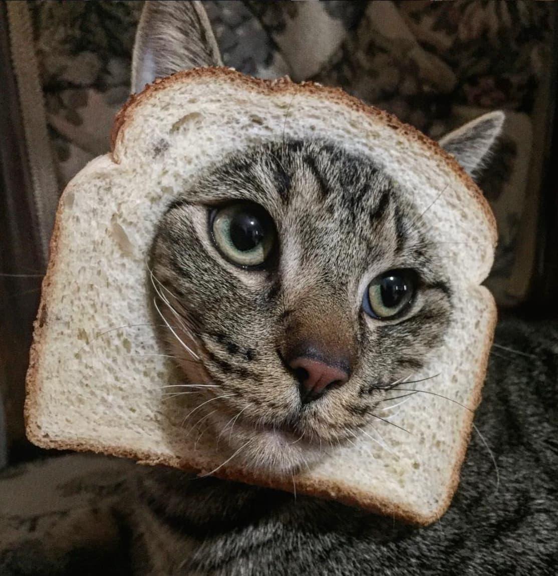 Котя в булочке