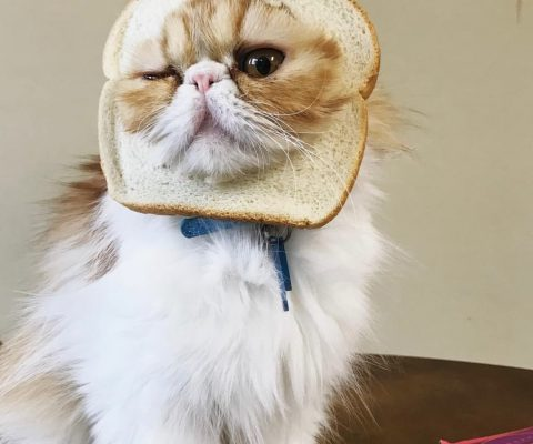 Котохлебинг: 18 фото котов в хлебе