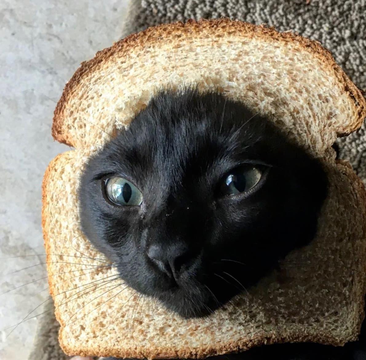 кот в хлебе фото