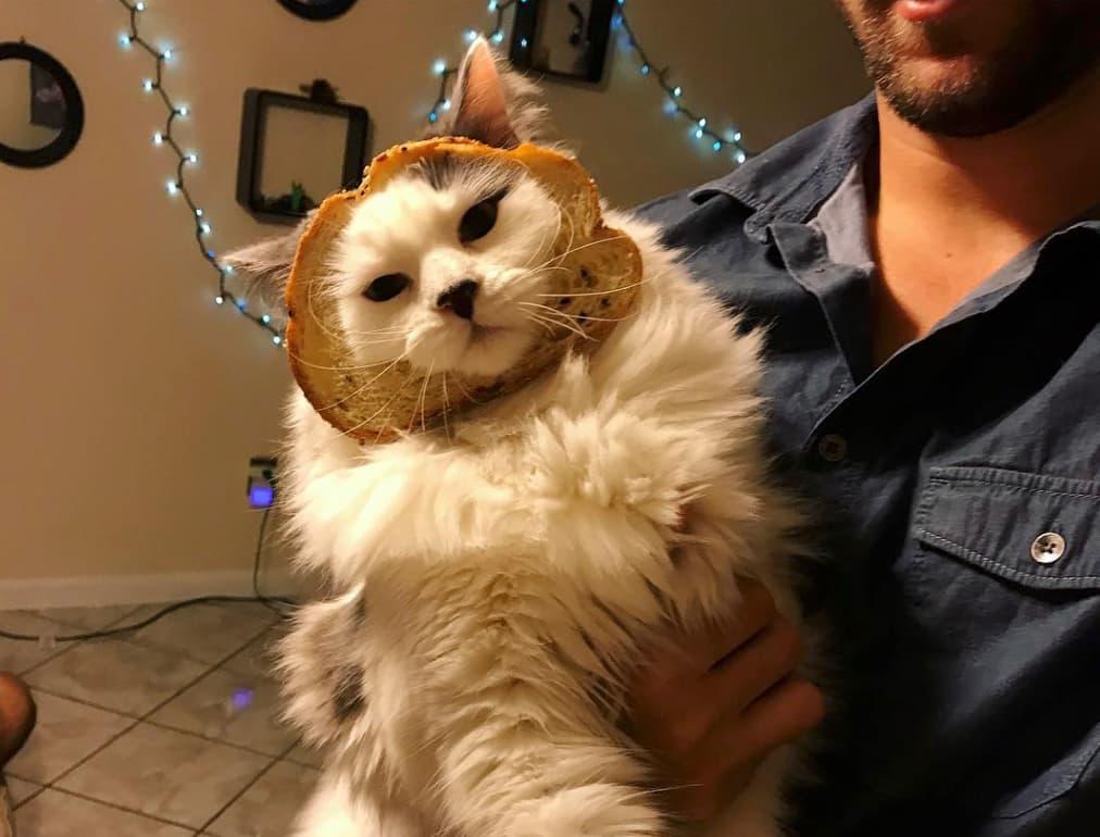 кот в хлебе на руках