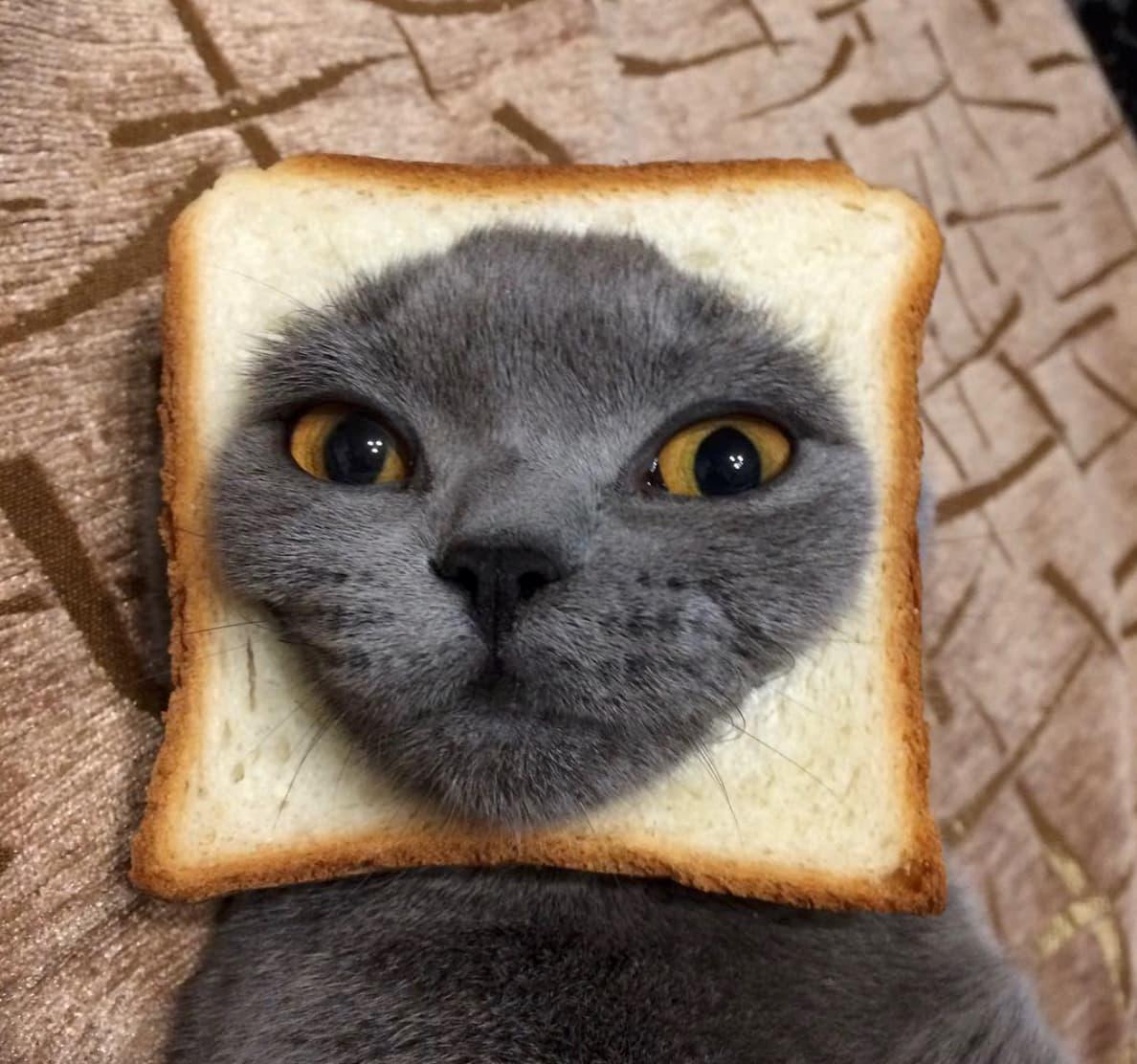 серый кот хлеб