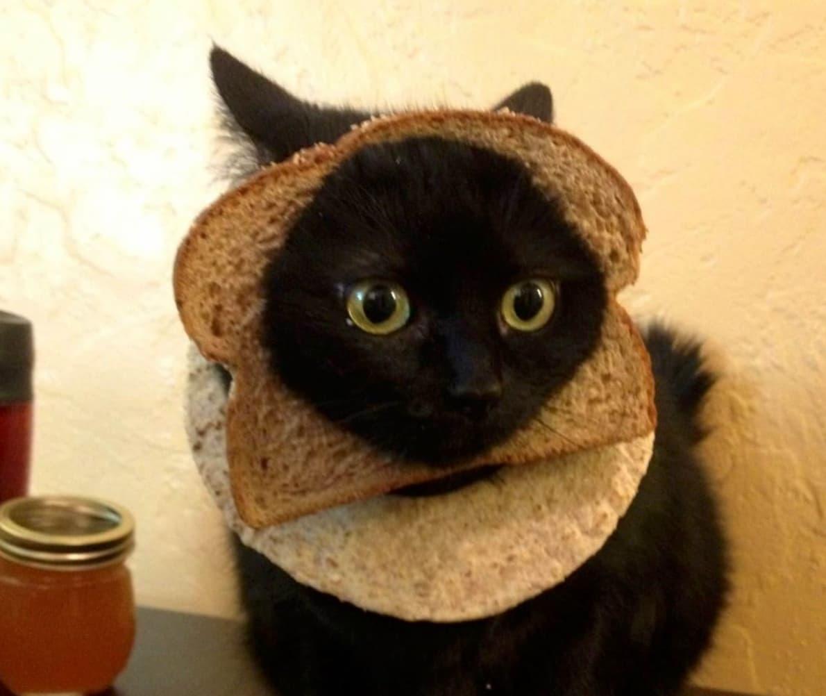 кот в хлебе и лаваше