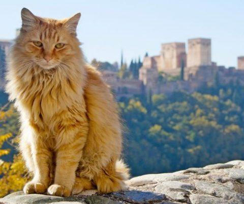 Китаец запрограммировал умный домик для кошек