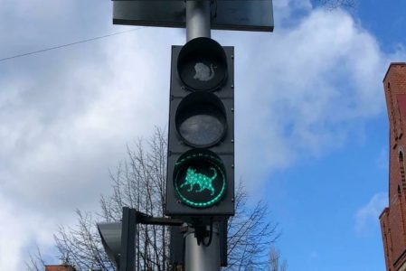 ВЗеленоградске установили кошачий светофор