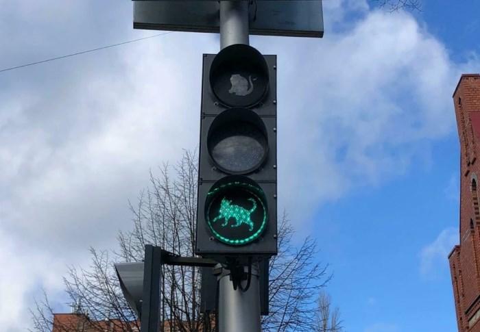 В Зеленоградске установили кошачий светофор