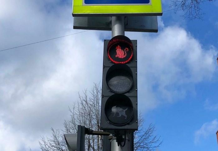 Красный сигнал светофора показывает сидящего кота