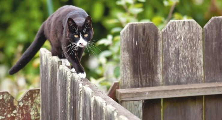 кот идет по забору фото