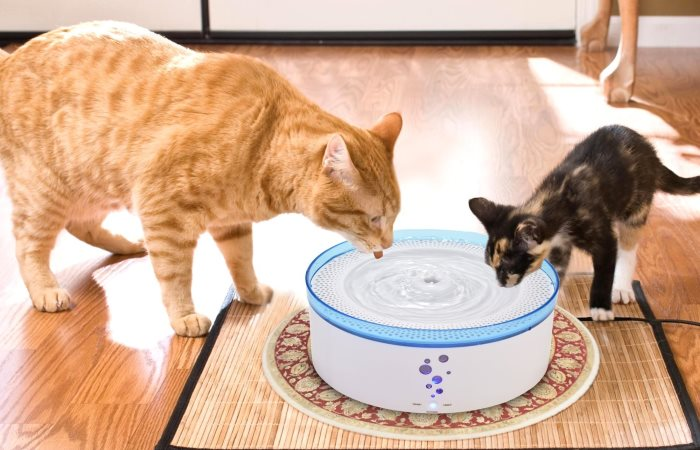 Питьевой фонтанчик для кошек