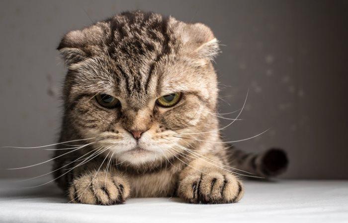 Кот вредничает и не пьет воду
