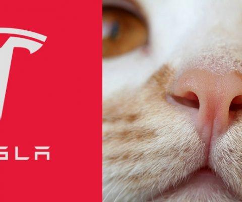 Логотип Тесла— это кошачий носик