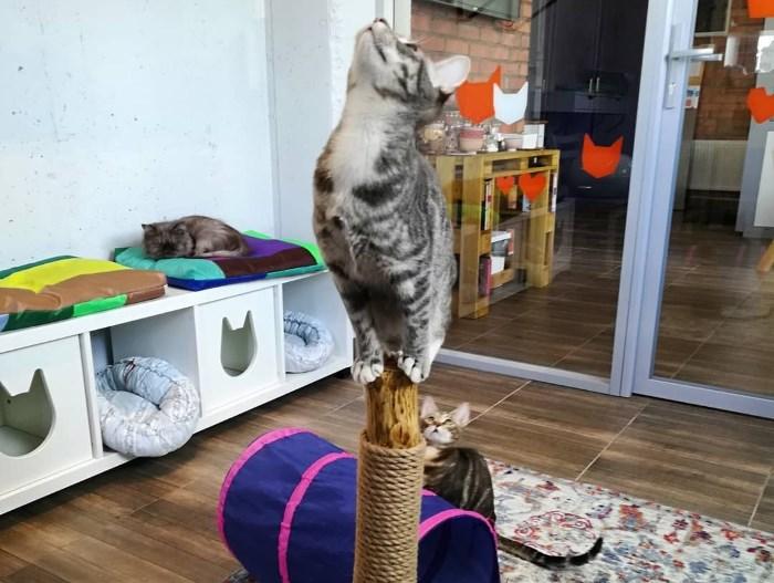 Веселые коты скучают по общению с человеком