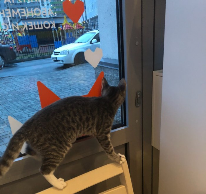 Кота из лофта можно забрать к себе домой