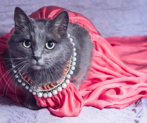 Наподиум модного показа забралась кошка
