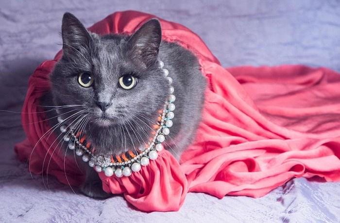 Кошка прошлась по подиуму модного показа в Марракеше