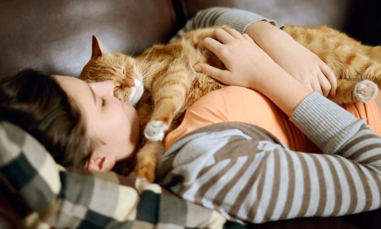 Ученые выяснили, почему кошки любят лежать на людях