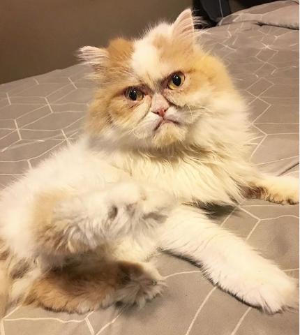 В инстаграме нашли нового угрюмого кота