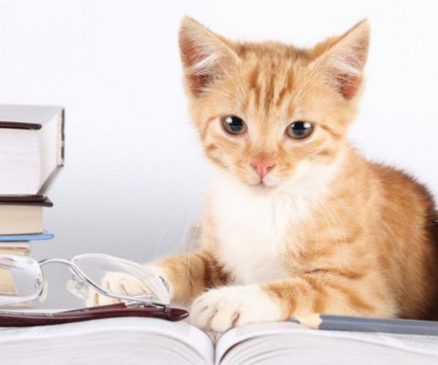 Кошки умнее собак, но тщательно это скрывают