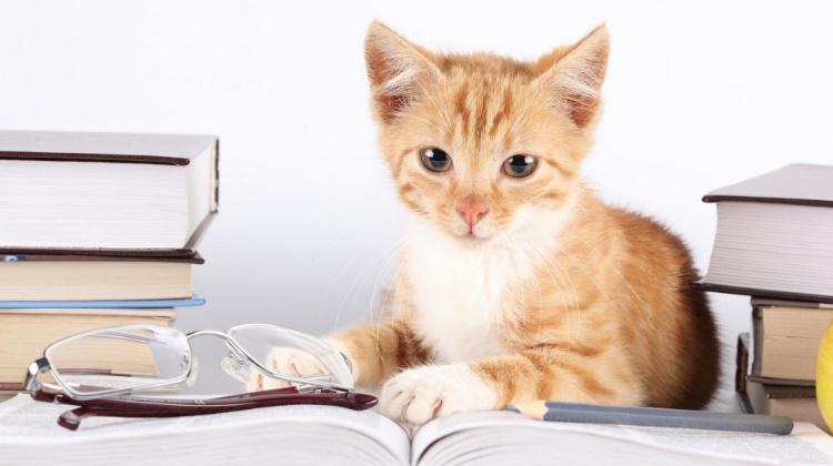 Ученые выяснили, что кошки скрывают свой интеллект
