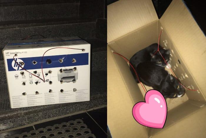 Обнаруженная коробка оказалось не бомбой, а двумя котятами