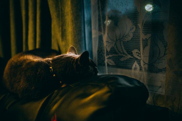 Кошка грустит и смотрит в окно