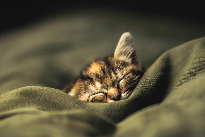 Котенок уснул в мягком пледе
