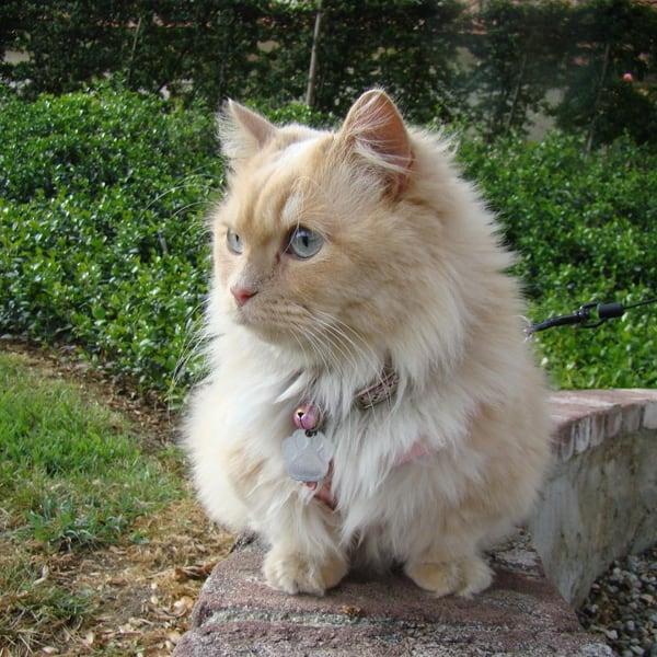 кот на прогулке