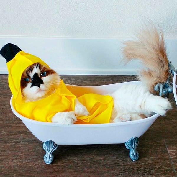кот в банане купается