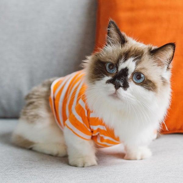 котик в костюме