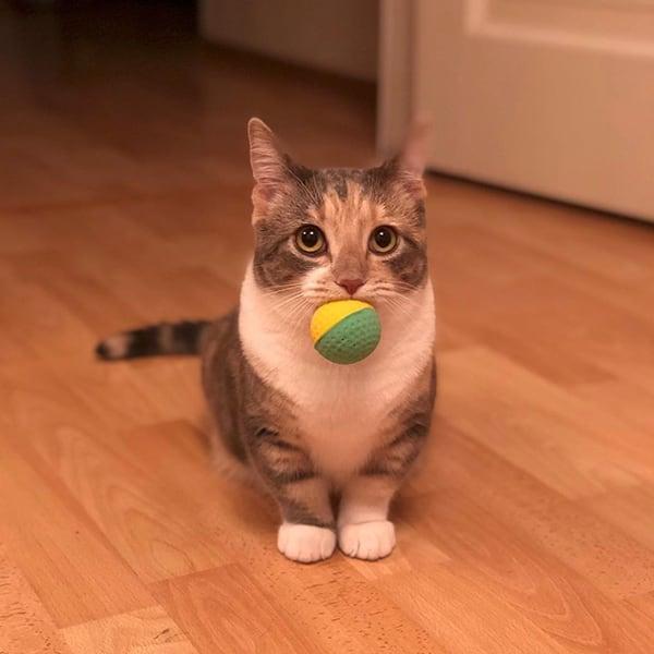 Манчкин принес мячик