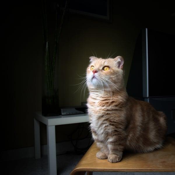 Кот на черном фоне
