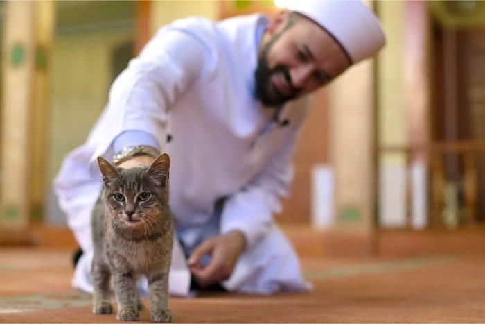 Отношение мусульман к кошкам