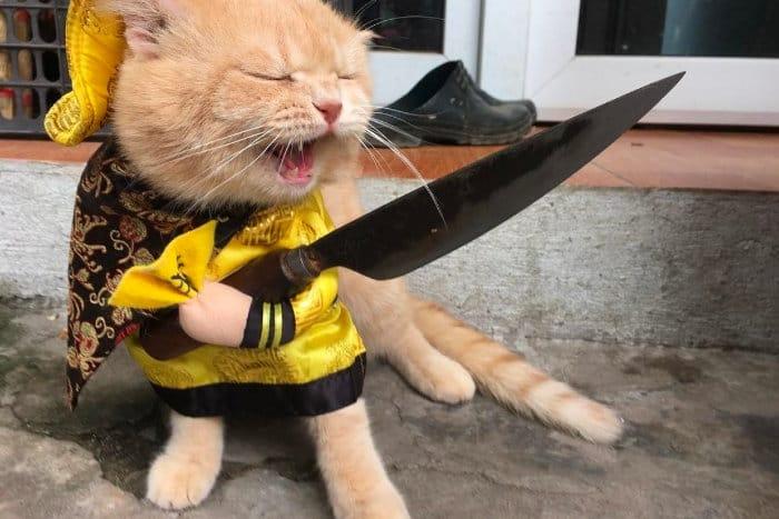 В некоторых странах принято употреблять кошек в пищу