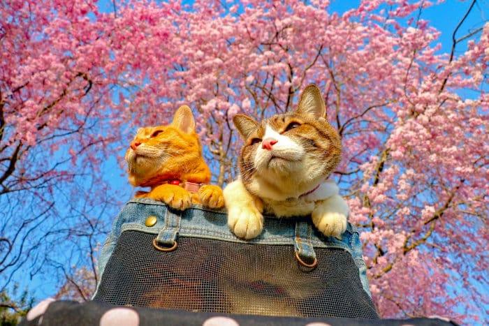 В Японии очень любят кошек