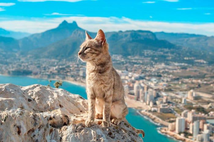 В Европе к кошкам относятся лояльно и уважительно