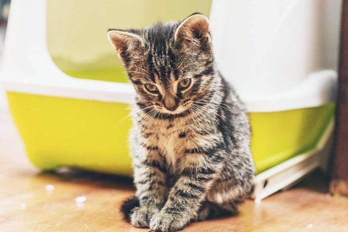 Котенку не нравится лоток