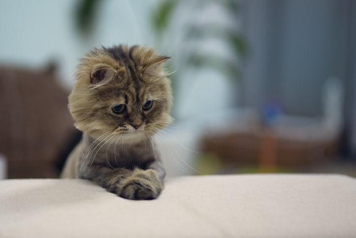 Грустный котенок сидит на диване