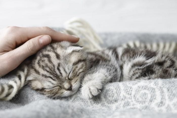 Полосатого котенка гладят