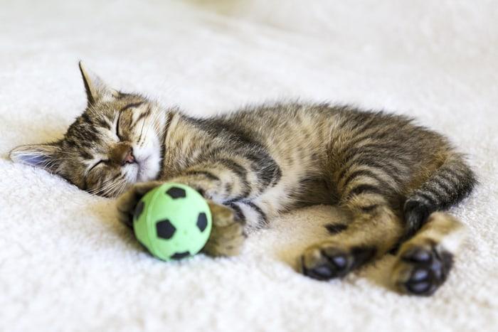 Котенок играл с мячиком и уснул