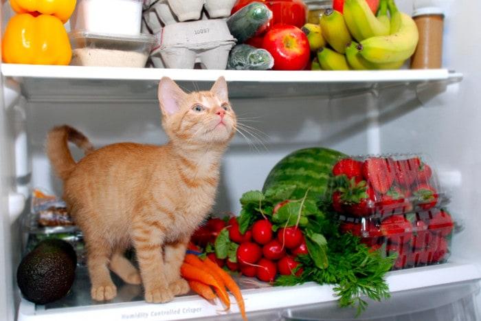 Котенок сидит в холодильнике с фруктами и овощами