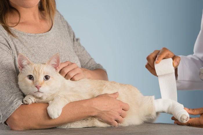 Переломы укошек: что делать икак лечить