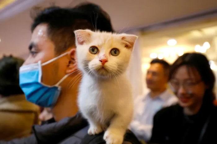 Кот на плече человека в маске