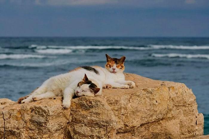 два котика у моря
