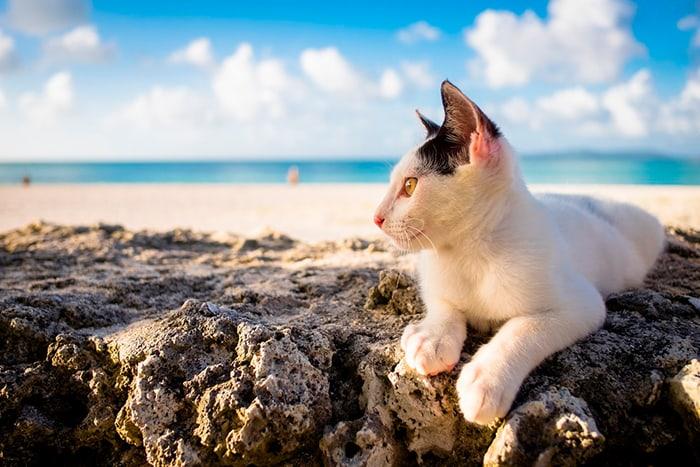 белый котик на пляже