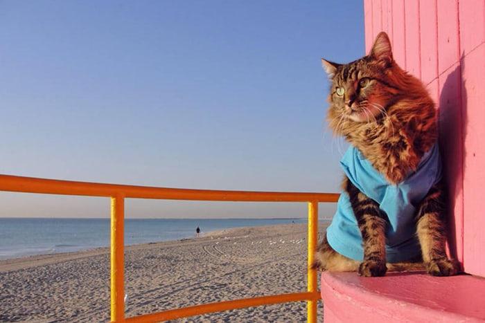 спасатель кот на пляже