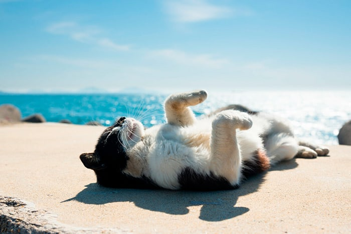 кот на пляже нежится на солнце